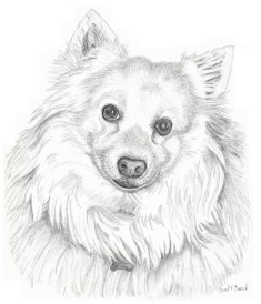 Kody-DogPortrait