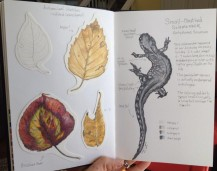 Autumn Leaves and Small-Mouthed Salamander
