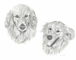 TwoDogs-Graphite-folio-Feb2013