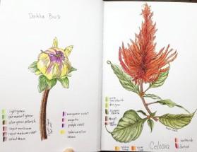 Dahlia Bud and Celosia Blossom
